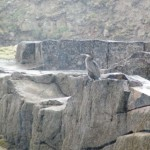 InishmurrayIsland02-1000